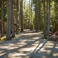 Forested area with tent sites.- Whistler RV Park + Campground