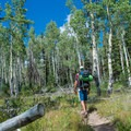 Backpacking among aspens on the Skyline Trail.- Tushar Skyline Trail Hike