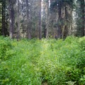 Make your own trail.- Pacific Northwest National Scenic Trail Section 5