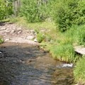 Multiple creek crossings along the trail.- Phoenix Falls Hike