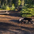 Typical site at Lava Camp Lake Campground.- Lava Camp Lake Campground