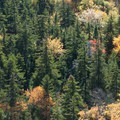 Fall colors are incredible in the area.- Indian Head + Fishhawk Cliffs