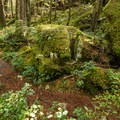Moss carpet in the Brohm Lake Interpretive Forest.- Brohm Lake Interpretive Forest Hike