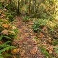 On the High Trail.- Brohm Lake Interpretive Forest Hike