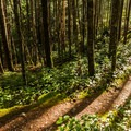 Shadows on the Bridge Trail.- Brohm Lake Interpretive Forest Hike
