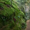 A moss-covered rock wall.- Brohm Lake Interpretive Forest Hike
