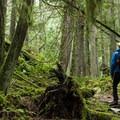 Lush green moss everywhere.- Hidden Grove Hiking Trails