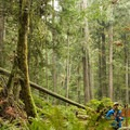 The dense forest has an ancient feel.- Hidden Grove Hiking Trails