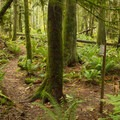 Well marked trails that are easy to follow.- Hidden Grove Hiking Trails