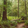 Dense old-growth forest.- Hidden Grove Hiking Trails