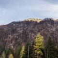 Driving through a burnt forest.- Keyhole Hot Springs / Pebble Creek Hot Springs