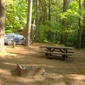 Shady campsite in Island Campground.- Island Campground
