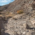 Parts of the trail are full of rock and sand.- Lunch Loops Mountain Bike Trails: Andy's Trail