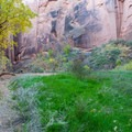 This is the place to camp in Buckskin, a surprisingly verdant paradise less than a mile from the confluence with Paria Canyon.- Buckskin Gulch Hike