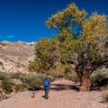 The trail starts up a beautiful wash with huge cottonwood trees.- Little Wildhorse Canyon Hike