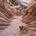 Dogs are welcome here.- Little Wildhorse Canyon Hike