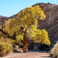 Lovely colors in the fall.- Little Wildhorse Canyon Hike