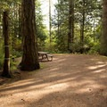 The sites sit at the bottom of old-growth Spruce trees.- Roberts Creek Provincial Campground