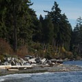 The dense forest comes right to the seashore.- Roberts Creek Provincial Campground