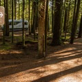 The trail from the campground down to the lake.- Alice Lake Campground
