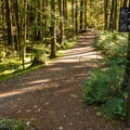 Walking trails around Alice Lake Campground.- Alice Lake Campground