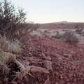 Cacti along the Bar M Trail.- MOAB Brand Mountain Bike Trails: Bar M