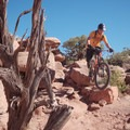 Technical line choice.- Amasa Back Mountain Bike Trails: Captain Ahab