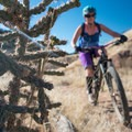 Huge cacti live here, so watch your tires.- Oil Well Flats Mountain Bike Trail