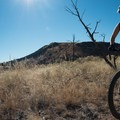 The sun bakes the open ground here.- Oil Well Flats Mountain Bike Trail