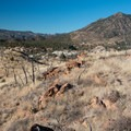Riding the Oil Well Flats Mountain Bike Trails.- Oil Well Flats Mountain Bike Trail