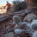 Frost covered cactus on the side of the trail.- Amasa Back Mountain Bike Trails: Hymasa