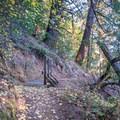 Skyline-to-the-Sea Trail.- Skyline-to-the-Sea Hike: Saratoga Gap to Big Basin Headquarters