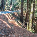 Trail crosses and follows the Big Basin Highway (Highway 236).- Skyline to the Sea Trail: Saratoga Gap to Big Basin Headquarters