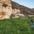 A marshy area formed by Liddell Creek.- Bonny Doon Beach