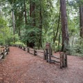 Connector trail to Blooms Creek Campground.- Redwood Hiking Trail