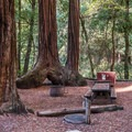 Stellar campsites.- Sempervirens Campground