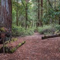 Walk-in campsites.- Wastahi Campground