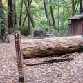 Pine Mountain Trailhead.- Blooms Creek Campground