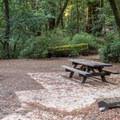 Blooms Creek Campground.- Blooms Creek Campground