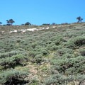 At times the refuge looks like the African savannah.- Hart Mountain National Antelope Refuge