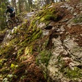 Rock lines in the Valleycliffe Trail Network.- Valleycliffe Mountain Bike Trails