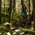 Bumpy technical singletrack.- Valleycliffe Mountain Bike Trails
