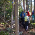The trail traverses through an open forest.- Jay Mountain Hike
