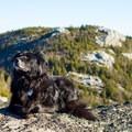 Jay Mountain is dog friendly.- Jay Mountain Hike