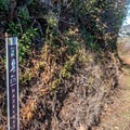 Hazelnut Trail has markers every quarter-mile.- Hazelnut + Weiler Ranch Trail Loop Hike