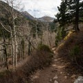 Along the trail between White Pine and Red Pine.  - Maybird Lakes Hike