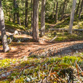 On the way up Comfortably Numb.- North Whistler Mountain Bike Trails: Out There