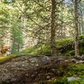 A wooden bridge on Out There.- North Whistler Mountain Bike Trails: Out There