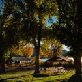 Picnic shelters under tall cottonwood trees.- Escalante Petrified Forest State Park + Campground