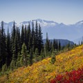Fall colors in Garibaldi Provincial Park. The Tantalus range in the distance.- Helm Creek to Rubble Creek Hike